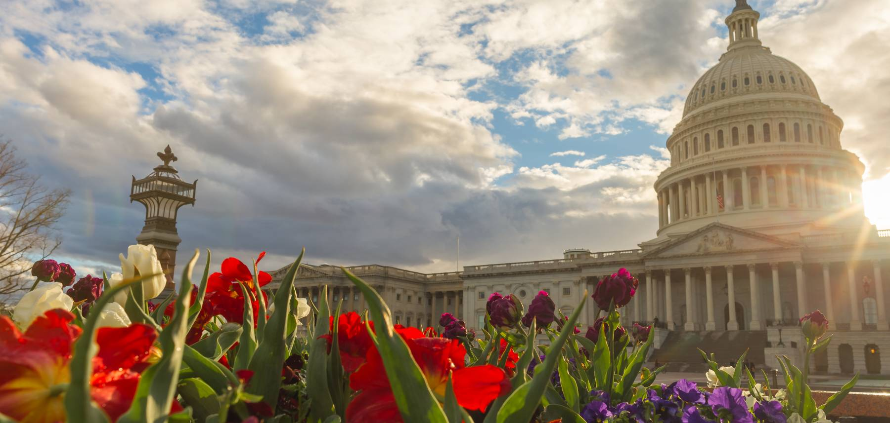 Capital Building in Springtime